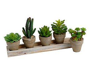 plateau avec une accumulation de cactus