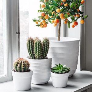 rebord de fenetre cactus